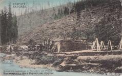 Вид кедрового лісу в Ворохті над Прутом (Оренштайн)