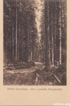 Ліс у підніжжя Пожежевської (ТТ)